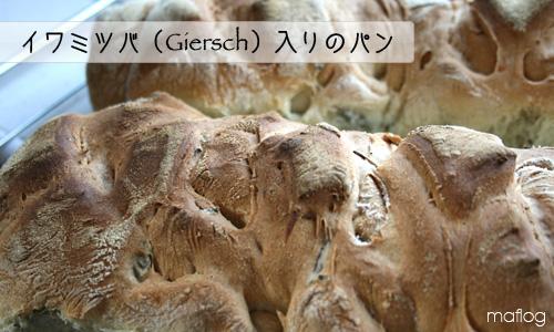 Giersch入りのパン