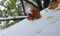 snowEC
